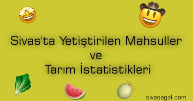 Sivas'ta Yetiştirilen Mahsuller ve Tarım İstatistikleri